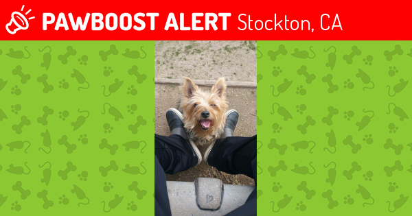 Found/Stray Male Dog in Stockton, CA 95206 (ID: 4611181 ...