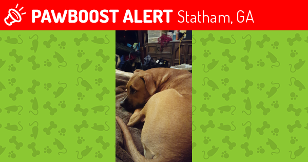 Deceased Male Dog last seen Near Jefferson St & Lucille St, Statham, GA 30666