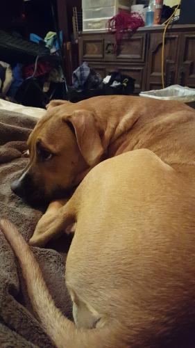 Lost Male Dog last seen Near Jefferson St & Lucille St, Statham, GA 30666