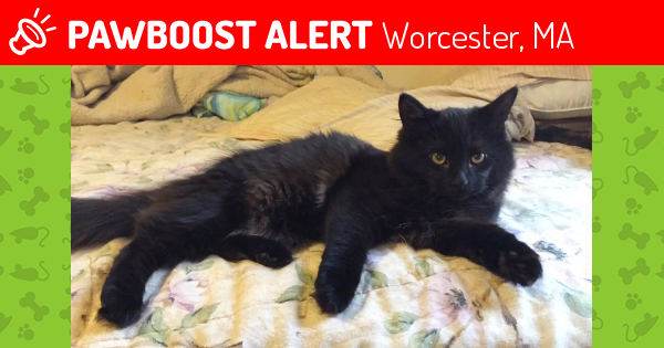Lost Black Cat Missing Worcester Park Female
