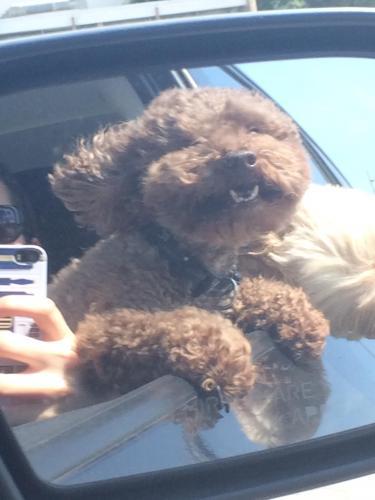 Dog Rescue Torrance Ca