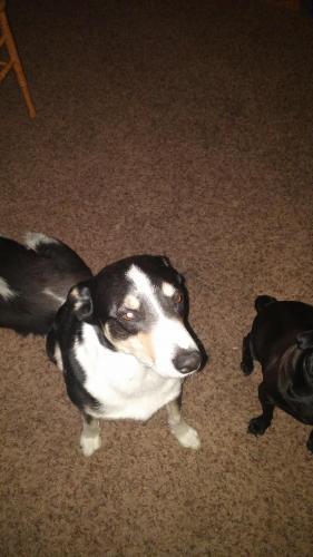 Dog Friendly Boise Id