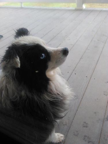 Found Female Dog last seen Near H D Atha Rd and County Line RD, Monroe, GA 30655