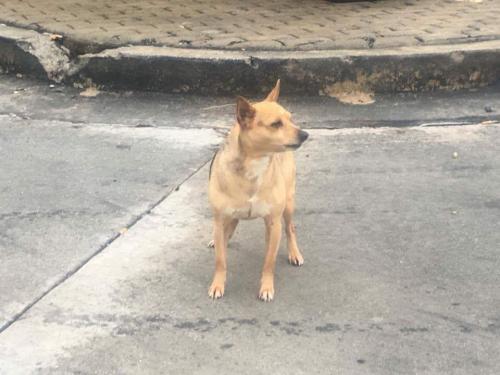 Found Male Dog last seen Near Concord Rd & US Hwy 129, Jefferson, GA 30549