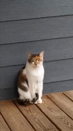 Lost Female Cat last seen Near Old Hamilton Mill Rd NE & Camp Branch Rd, Buford, GA 30519