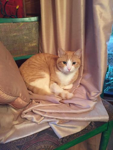 Lost Male Cat last seen Near Bold Springs Rd NW & Hey 81, Monroe, GA 30656