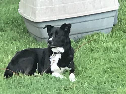 Birch Hill Dog Rescue Facebook