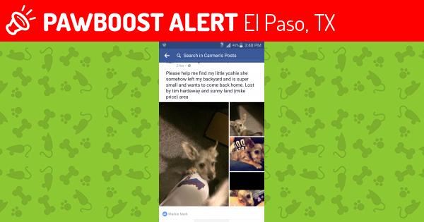 Craigslist El Paso Pets Lost And Found Www Madisontourcompany Com