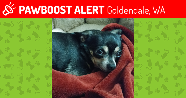 Lost Female Dog in Goldendale, WA 98620 Named Doodle (ID