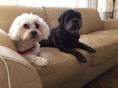 Home At Last Dog Rescue Philadelphia