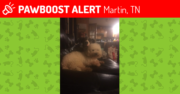 lost male dog in martin tn 38237 named furby id 4630905 pawboost