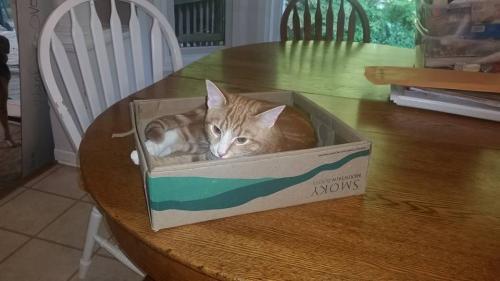 Cat Rescue Manassas Va