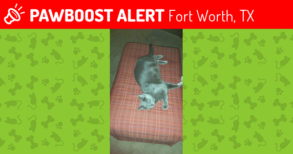 Lost Cat In Fort Worth TX 76120