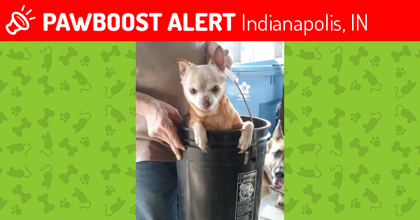 Lost Male Dog last seen Near W Farnsworth St & Woodrow Ave, Indianapolis, IN 46241