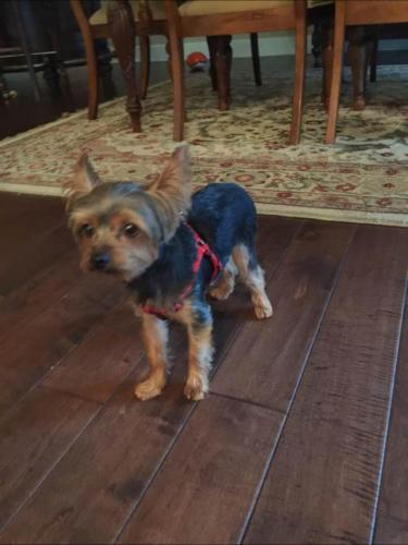Lost Male Dog last seen Near SE 6th Ct & SE 11th Ave, Fort Lauderdale, FL 33301