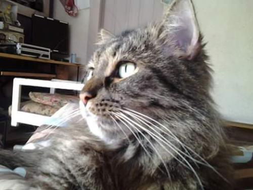 Lost Male Cat last seen Near W Wilkins St & Kappes St, Indianapolis, IN 46221