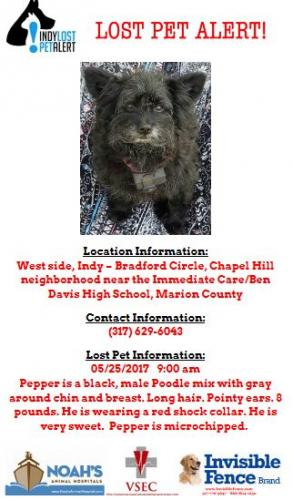 Lost Male Dog last seen Near W St Clair St & St Clair Ct, Indianapolis, IN 46214