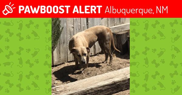 lost dog albuquerque