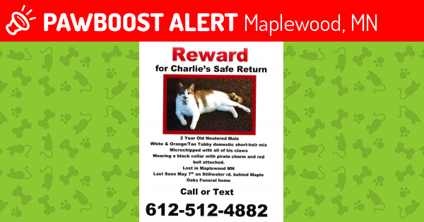 Lost Male Cat In Maplewood Mn 55119 Named Charlie Id 4562528