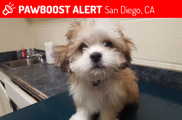 Lost Male Dog in San Diego, CA 92139 Named Puppy Doobie (ID