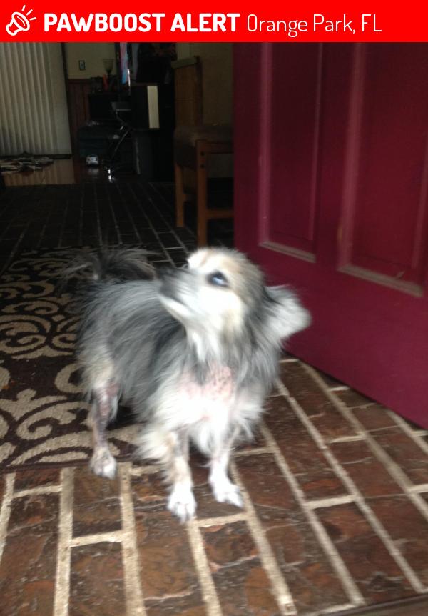 Found Stray Male Dog In Orange Park Fl 32073 Id 4654696