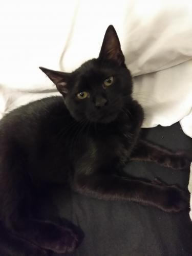 Lost Female Cat last seen Near Thornridge Ave & Cedar Creek Pl, Davie, FL 33325