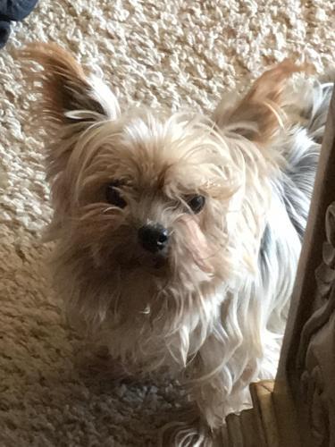 Lost Female Dog last seen Near Tigertail Road, Apple Valley, CA, Apple Valley, CA 92307