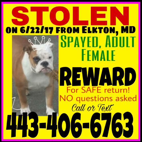Lost Female Dog last seen Near Augustine Herman Hwy & Frenchtown Rd, Elkton, MD 21921
