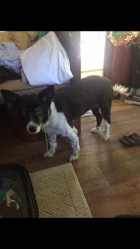 Lost Female Dog last seen Near Vis Palomar & Vis Buena, Fairfield, CA 94534