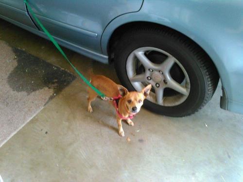 Lost Male Dog last seen Near Frederick St & Eucalyptus Ave, Moreno Valley, CA 92553