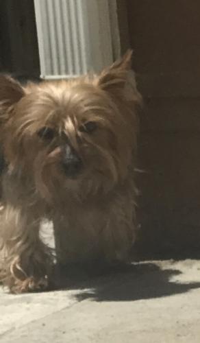 Lost Male Dog last seen MacArthur Blvd & 90th Ave, Oakland, CA 94621