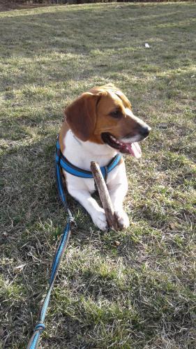 Lost Male Dog last seen Bathurst Street, Toronto, ON, Canada, , ON