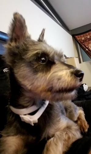 Found Female Dog last seen Near Oakridge Dr SW & Weller Rd SW, Lakewood, WA 98498