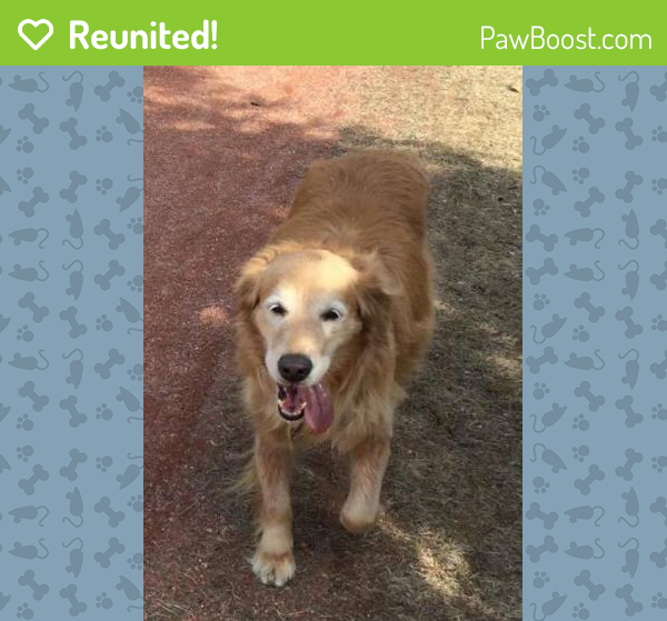 Reunited Male Dog last seen Babette Rd S. &  Hwy #55, Athabasca, AB T9S