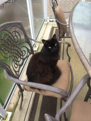 Lost Male Cat last seen Seline Crescent and Patrick Street, Barrie, ON L4N 5V7