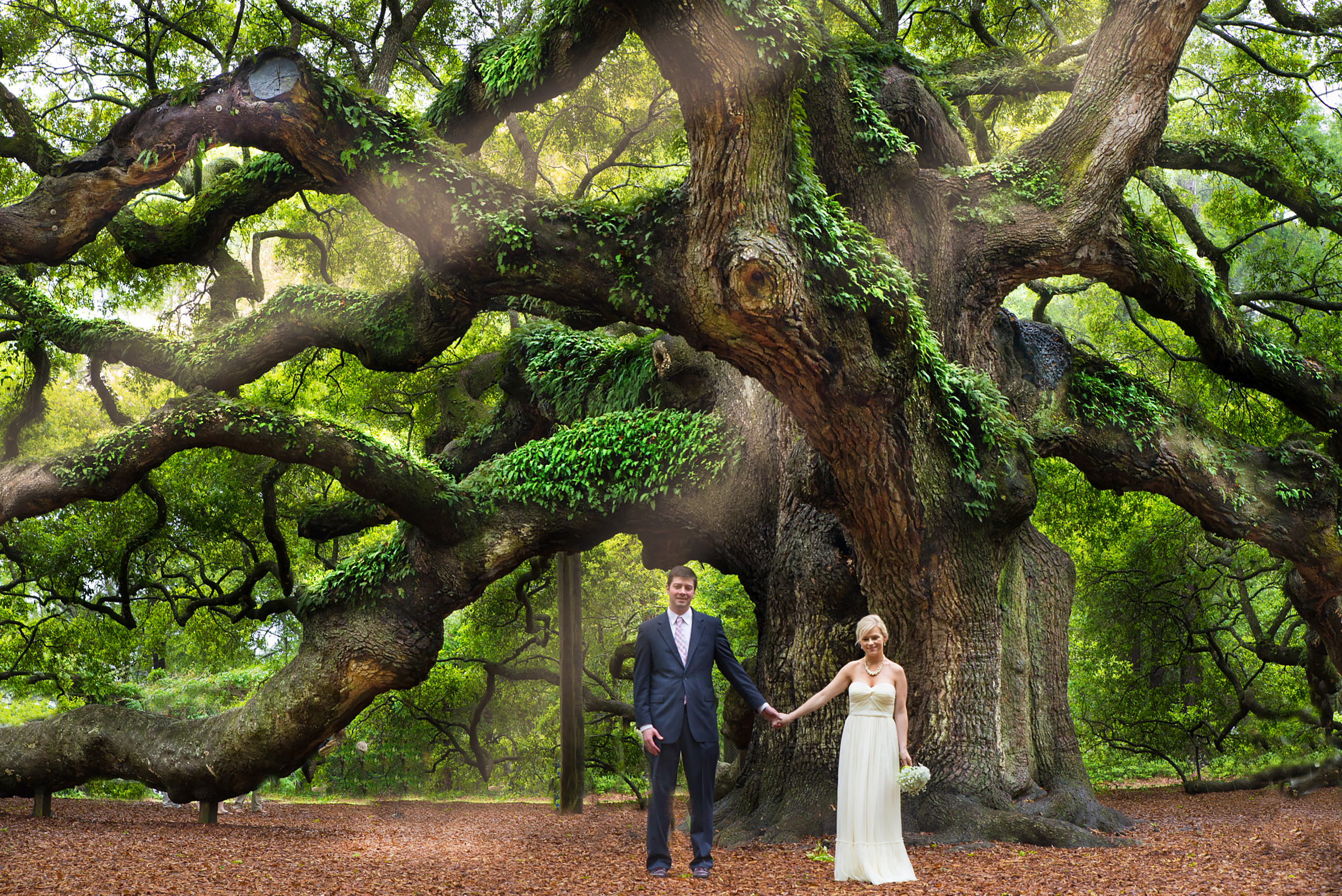 Angel Oak on Johns Island, South Carolina