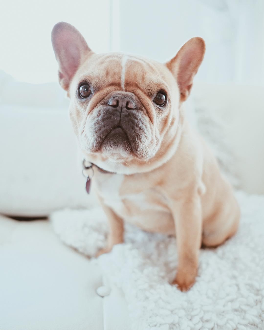 Current relationship status- doggo. Calvin Corzine Yoga
