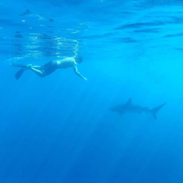 Swimming with sharks off of Hawaii - Calvin Corzine Yoga