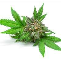 Fast Iowa Medical Marijuana Card Dr Mary Clifton 917-297-7439