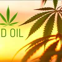 Best CBD Hemp Oil Full Spectrum For Sale Palmetto Harmony 843-331-1246