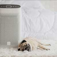 Professional Air Purifiers for Pet Allergens US Air Purifiers 888-231-1463