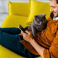 Superior CBD Pet Products For Sale Palmetto Harmony 843-331-1246