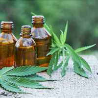 Top Quality CBD Pet Products For Sale Palmetto Harmony 843-331-1246
