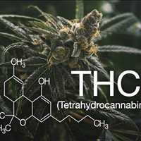 Purchase Premium Delta 8 THC Products Online from Delta 8