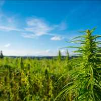 Industrial Hemp Drying Facility Tennessee LB Processors 615-746-8485