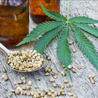 Best Hemp Drying Facility Tennessee LB Processors 615-746-8485