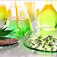 NorCal GCX Marketplace Exchange For Cannabis Extraction Labs For Buyers 415-475-9180