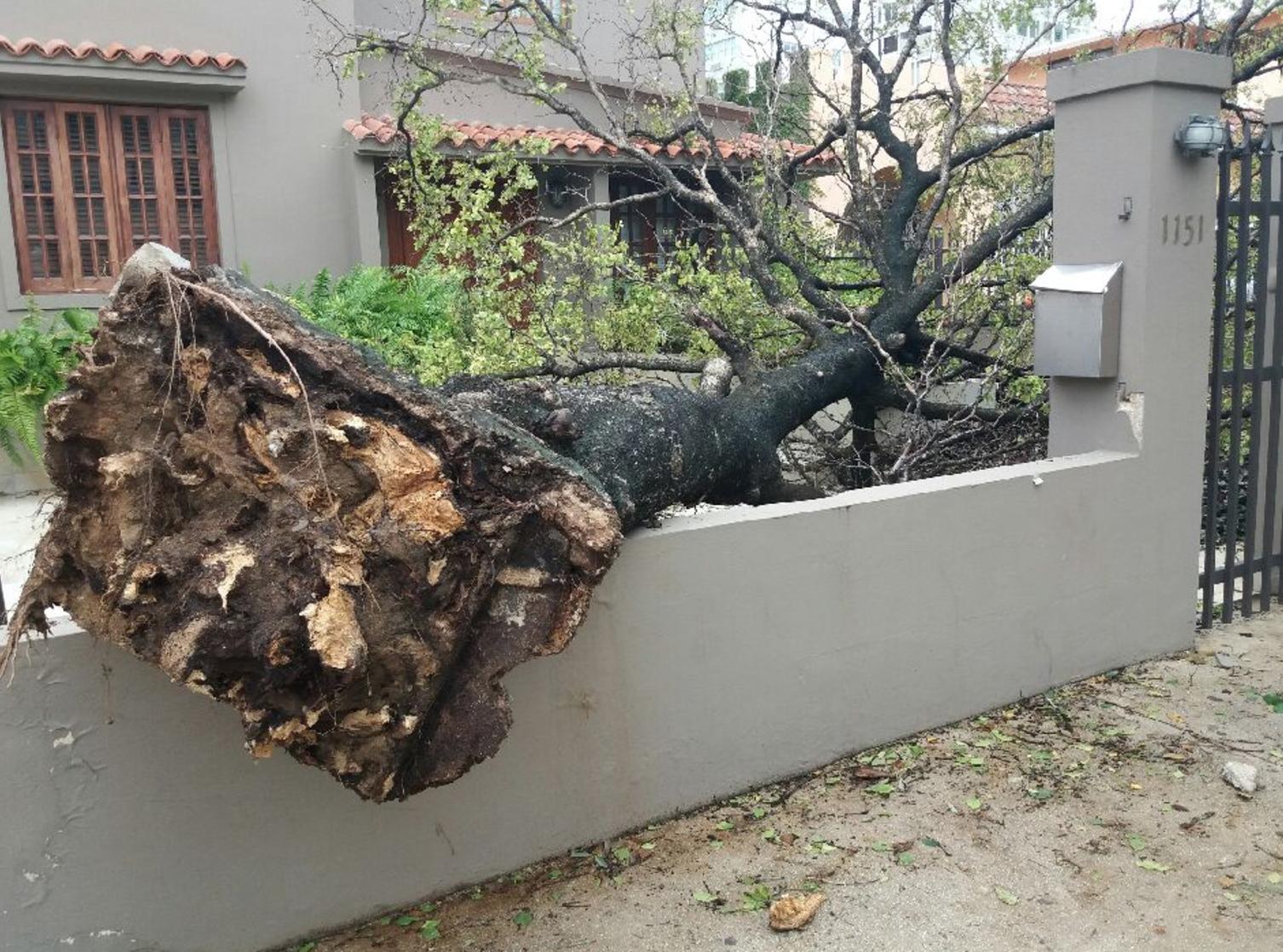 Trees Down In Puerto Rico From Hurricane Irma Photo: Rachel Gikas, Condado