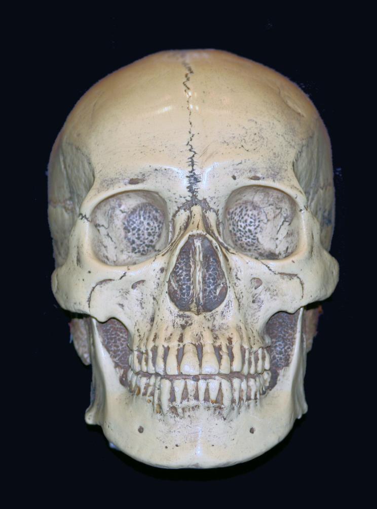 Man and Woman Find Skull In Florid Keys Photo: Sujit kumar, WikiCommons, No Change