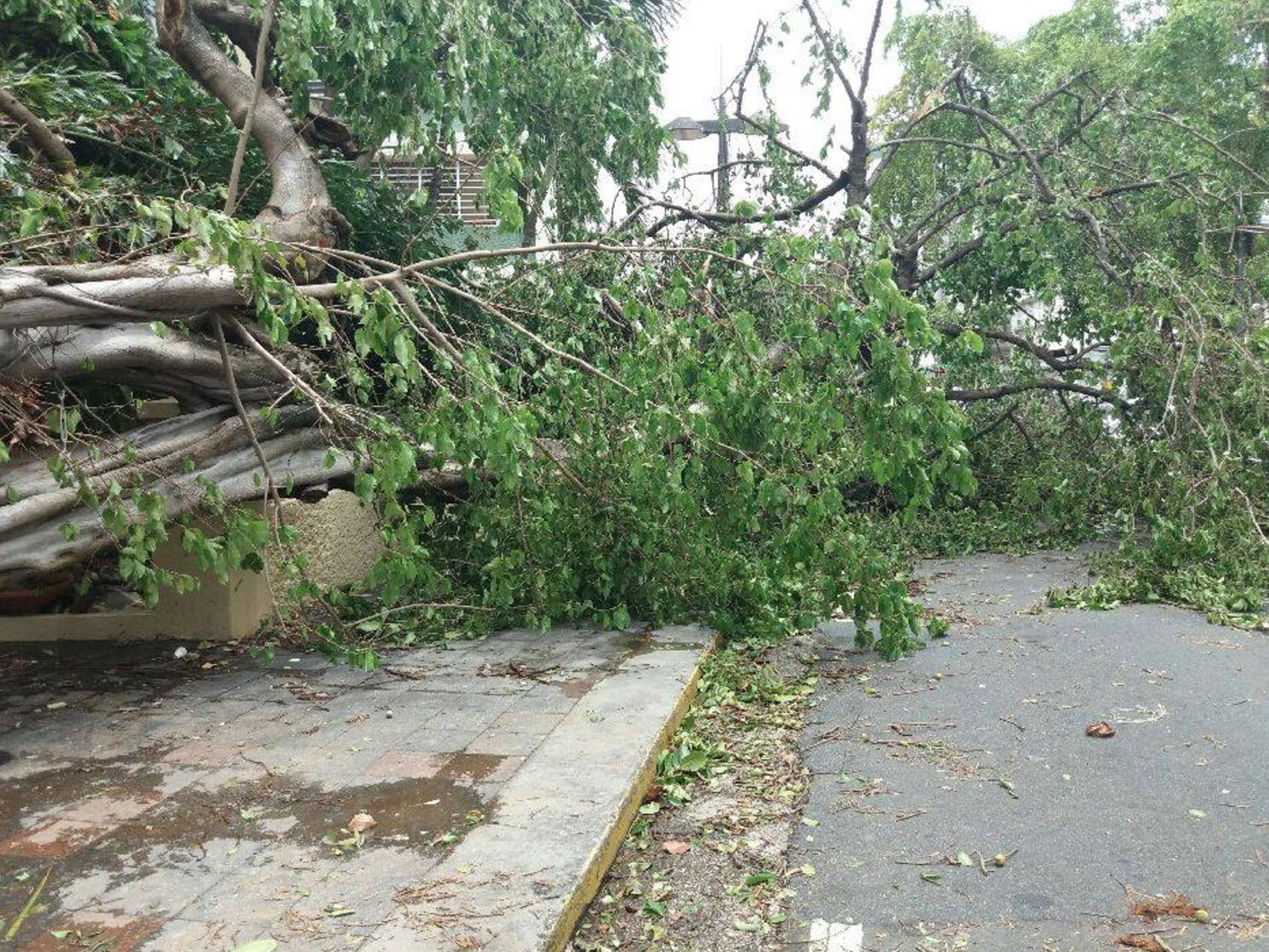 Hurricane Irma Destruction In Puerto Rico Photo: Rachel Gikas, Condado